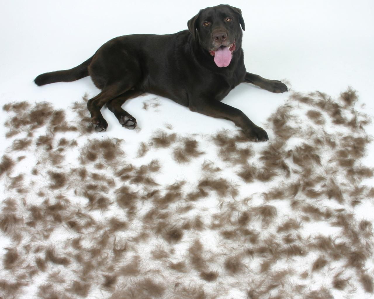 today tease for best spill is rugs home this dogs rug ruggable the washable machine proof