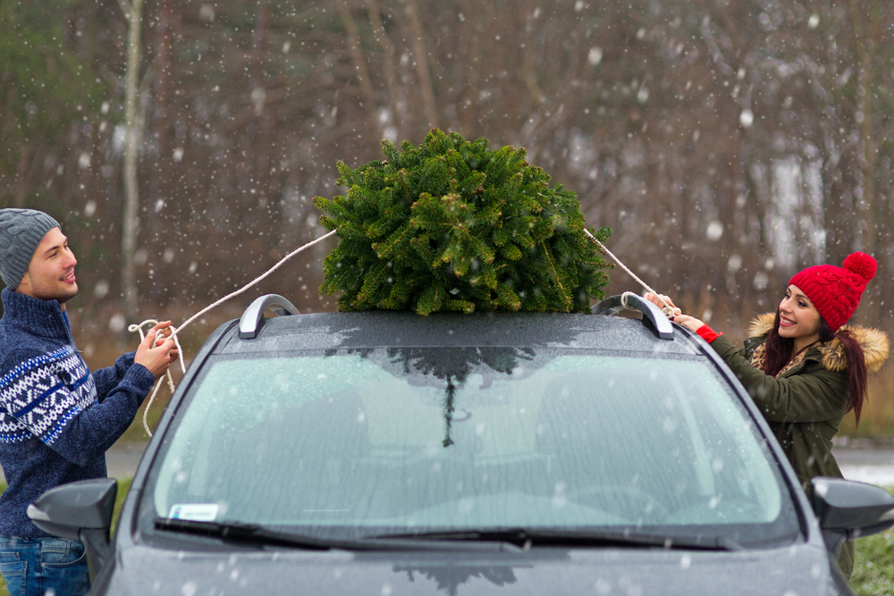 putting christmas tree on top of car