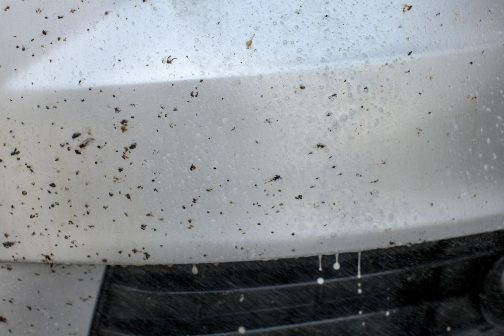 Insect remover being sprayed on car front, covered with bugs and flies.